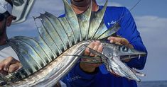 The Dragon of the Deep: Lancetfish Amberjack Journal T Pike Fishing, Kayak Fishing, Fishing Trips, Oarfish, Fauna Marina, Water Dragon, Fishing Photography, Oceans Of The World, Dragon Design
