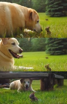 Dog meets baby bunny and decides to keep him forever (video) Cute Baby Animals, Animals And Pets, Funny Animals, Funny Pets, Dogs And Puppies, Mini Puppies, Dog Care Tips, Baby Bunnies, Healthy Dog Treats