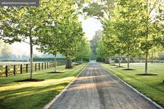 Tree Lined Driveways. Like how the 2 old established trees have been incorporated into the avenue.