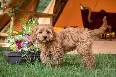 An editorial shoot for Tepees and Tents, a wedding tipi company in Northamptonshire. Shot at Pipewell Hall by Sarah Vivienne Photography, Northampton. Tipi Wedding, Vivienne, Your Dog, Weddings, Dogs, Summer, Photos, Photography, Image