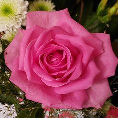 #flora #flowerslovers #flowers #flower #rose #roses #nature #buquê http://gelinshop.com/ipost/1516206552864124823/?code=BUKpdOdle-X