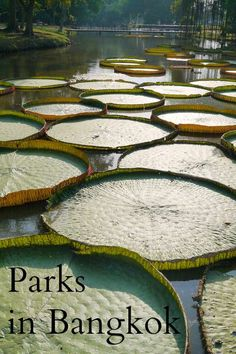 Bangkok is full of beautiful parks, find the best ones in our post about parks in Bangkok. Thailand Travel with Renegade Travels.