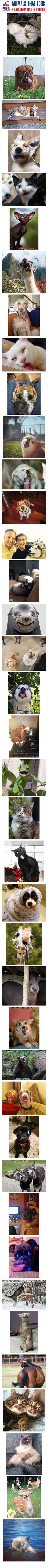 Animals That Look Hilariously Bad In Photos - MyFunnyPalace