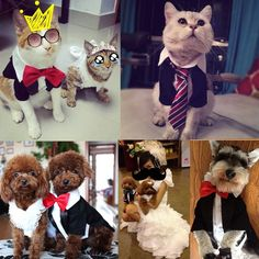 Amazon.com : i'Pet® Handsome Prince Cat Bridegroom Wedding Tuxedo Faux Twinset Design Small Boy Dog Formal Attire Doggy Party Wear Puppy Birthday Outfit Doggie Photo Apparel with Buttons Holiday Fabric Clothes Halloween Classics Collection Costume (Black Tuxedo, Large) : Pet Supplies $16.89