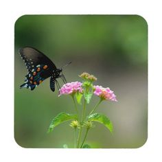 Black Swallowtail Butterfly Beverage Coaster