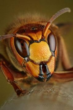 Art by Nature - Insects From Our World