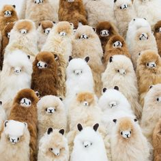 The more alpacas, the better❤ Alpaca Funny, Alpaca Toy, Cute Alpaca, Alpaca Plushie, Baby Alpaca, Llama Plush, Fluffy Cows, Fluffy Animals, Animals And Pets