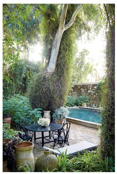 Umberto Pasti's garden in Tangier - By the swimming pool are old jars from northern Morocco and a eucalyptus tree covered in wire vine (Muehlenbeckia complexa).