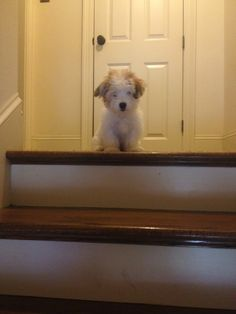How many times must he go up the stairs...before he learns that he's too small to get back down?