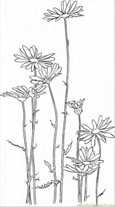 Daisy 5 coloring page - Free Printable Coloring Pages - http://designkids.info/daisy-5-coloring-page-free-printable-coloring-pages.html #designkids #coloringpages #kidsdesign #kids #design #coloring #page #room #kidsroom