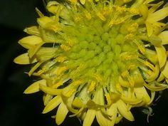Pollen 3