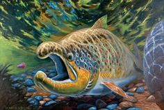 brown_pro_lg Trout Fishing, Fly Fishing, Brown Trout, Main Theme, Japanese Dragon, Underwater World, Fish Art, Wildlife, The Incredibles