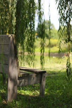 Trauerweide / Weeping Willow - Bank / Gartenbank / Parkbank - Bench in the Park / Garden Bench Bonsai Garden, Garden Trees, Trees To Plant, Tree Planting, Willow Tree Art, Baumgarten, Weeping Willow, Ponds Backyard, Trendy Tree