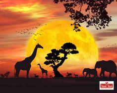 safari invitation