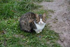 The Cat - so beautiful animal, inevitable in the yard