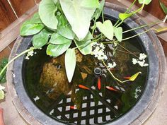 14 Innovative Aquarium Ideas For The Backyard - Top Inspirations