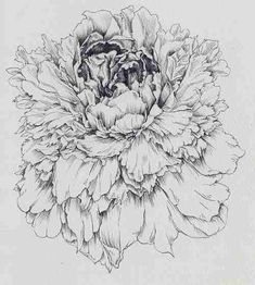 Pencil illustration of a flower