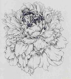 Pencil illustration of a flower