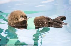 Sea Otters are the best