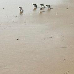 #portugal #algarve #ig_algarve_ #riaformosa #birds