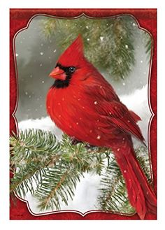 Red Cardinal House Flag - Carson - Red Cardinal in the Snow Pretty Birds, Beautiful Birds, Christmas Bird, Christmas Topper, Foto Real, Cardinal Birds, Christmas Paintings, Bird Pictures, Colorful Birds