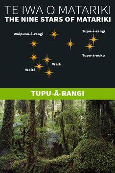 Te Iwa o Matariki Maori Words, Maori Symbols, Marine Plants, Pepper Tree, Winter Sky, Simple Machines, The Nines, Early Childhood Education, Nature Reserve