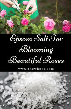 You will be amazed to learn all the Epsom Salt Garden Uses and we are sure you will learn a thing or two. Our post has lots of charts and a video tutorial .