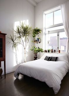 White and wood bedroom with lots of lights and plants