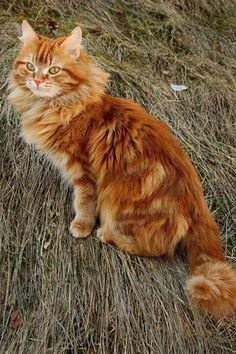 """Orange? Nah! They call me """"Big Red""""! ~ & you, Miss, are gorgeous!! <3"""
