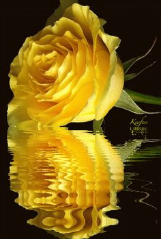 Animated Flowers. Animated Graphic, Water Reflections, Reflection, Animated Graphics,  Animated Gif, Animated Gifs,  Flores,  Rosas,  Flowers, Beautiful Flowers, Keefers photo 75b481a1.gif