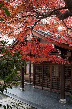 Beautiful fall in Kyoto #japan