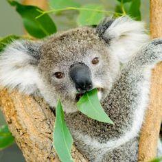 unusual australian wildlife pics | Unique Australian Animals