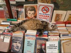 A cat resting on books at a used book store. This is just plain adorable.