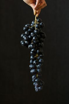 Black Grapes | Princess Tofu