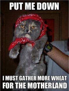 Put Me Down kittie