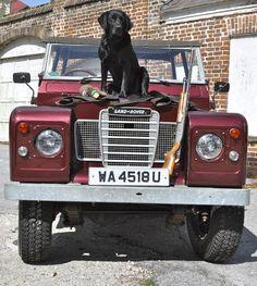 Jet, a black Labrador retriever from Charleston, South Carolina