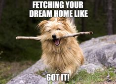 """Real estate meme, """"Fetching your dream home!"""" The Effective Pictures We Offer You About home selling real estates A quality picture can tell you many things. You can find the most beau Real Estate Career, Real Estate Business, Real Estate Tips, Real Estate Investing, Real Estate Marketing, Real Estate Broker, Marketing Ideas, Real Estate Quotes, Real Estate Humor"""
