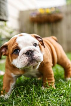 TOP 10 BEST DOG BREEDS FOR A FAMILY WITH KIDS