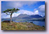 Torriden Scotland
