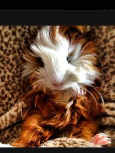 My SWEET Penelope!!!!!