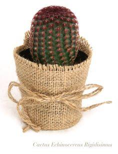 Conjunto de cactus con tela de yute Apucoco