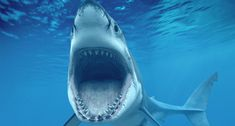 Great White Shark Picture Mouth Open Showing Teeth HD Wallpaper