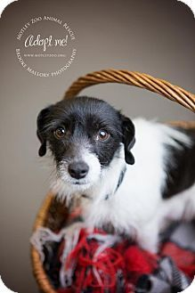 Terrier (Unknown Type, Medium) Mix Dog for adoption in Redmond, Washington - Mary Winchester