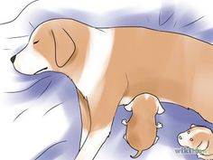 Help Your Dog After Giving Birth