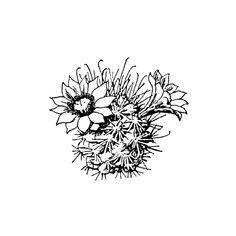 Daisy Cactus 419D