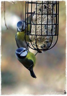 Suvikumpu Bird Feeders, Birds, Outdoor Decor, Home Decor, Decoration Home, Room Decor, Bird, Home Interior Design, Home Decoration