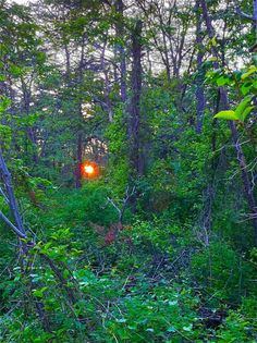 Sunset in thewoods