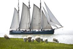 #Zeilen op het #IJsselmeer op een onze prachtige #zeilschepen. Tall Ships, Sailing Ships, Dutch, Nautical, Boat, Landscape, Steam Boats, Battleship, Sea Angling