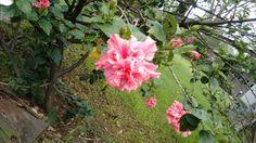 Flores 3 en CU