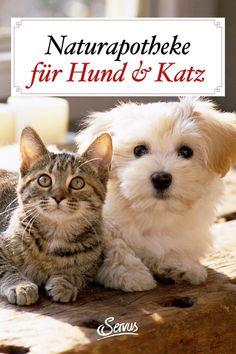 Diese Kräuter und Heilpflanzen helfen unseren Haustieren bei Prellungen, Husten und der Wundheilung. Mit Rezepten. #krankekatze #krankerhund #haustiere #heilpflanzen #kräutermedizin #naturheilmittel #naturheilkunde #naturapotheke #servusnaturapotheke #servus #servusmagazin #servusinstadtundland Cats, Animals, Inspiring People, Pet Dogs, Wound Healing, Vet Office, Gatos, Animales, Animaux